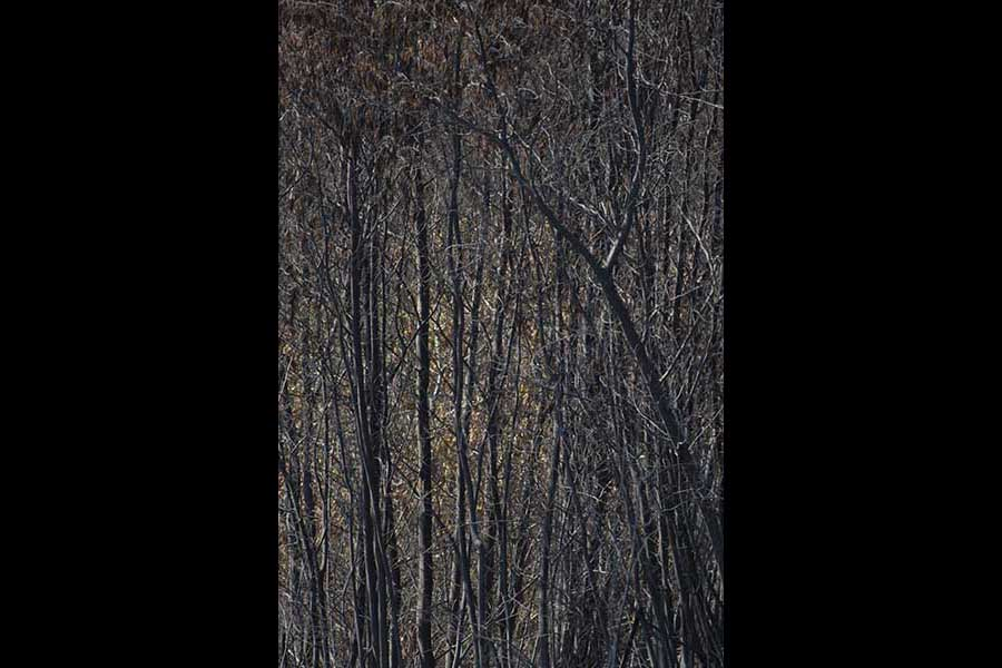 Photo of burnt forest in the Constancia 2013 fire